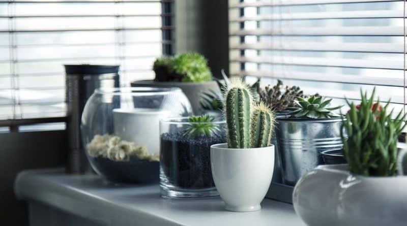 Pots de cactus en décoration