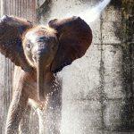 Quels zoos visiter en famille en France ?