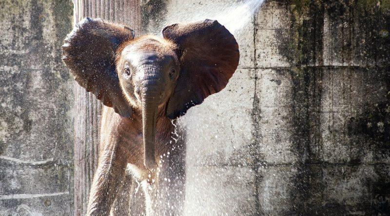 Zoo bébé éléphant